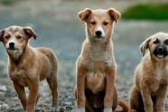 听风 | 爱狗,恨狗,活成狗