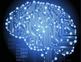 想知道大脑如何运作?先画一张脑数字图谱