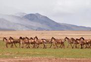 西藏首批高海拔地区群众生态搬迁实录