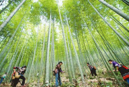 守住生态红线 盘活林业资源 湖州上半年造林近万亩
