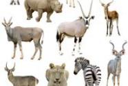 这才是保护动物的正确打开方式