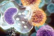 app彩票下载科学家找到肿瘤免疫治疗潜在新途径