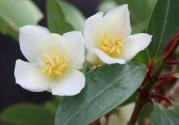 重庆发现三个植物新物种
