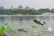 江苏长荡湖:回归自然风貌,拥抱绿色发展
