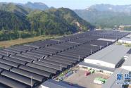 景县:产业扶贫促增收