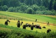 """丹麦演绎绿色农业""""新童话"""""""