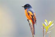 保護區飛來更多珍稀鳥