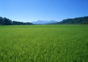 河南西华:田野直播让农民找到销货新渠道