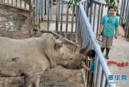 """北京动物园:让动物舒适安全度过""""三伏天"""""""
