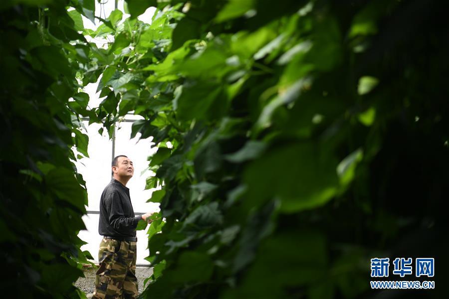 """(壮丽70年·奋斗新时代——共和国发展成就巡礼·图文互动)(7)以""""绿色""""身姿站上发展前沿——甘肃绿色转型发展纪实"""