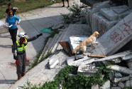 国际搜救犬搜救比赛在京举行