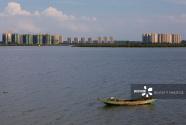 海南澄迈:顶风而上,肆意围海造地、毁坏红树林