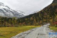 西藏派墨农村公路秋色如画