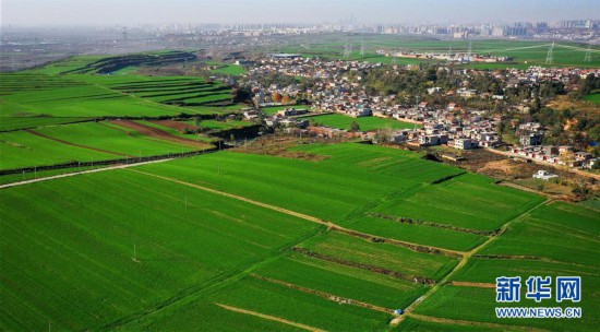 (美丽中国)(1)陕西长安:冬日小麦铺绿毯