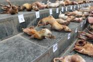 非法野生動物交易,堅決打擊!