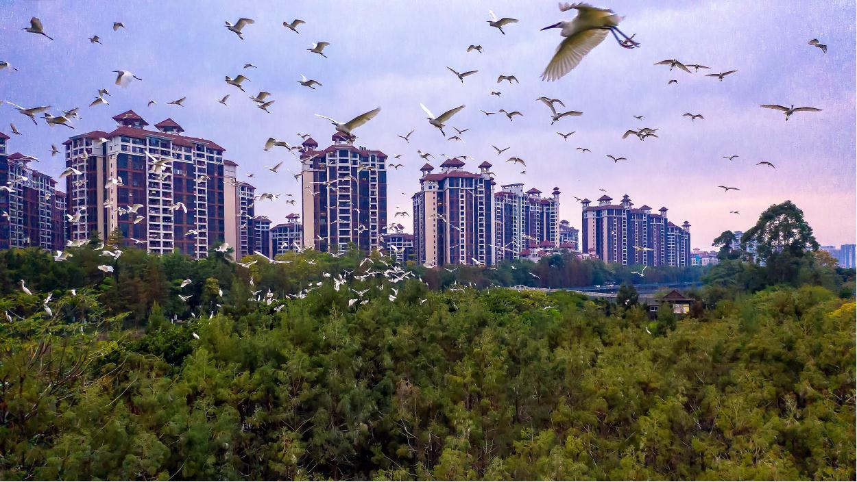 佛山伦教:喧嚣城市群,秘境鸟天堂