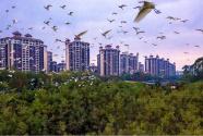 佛山倫教:喧囂城市群,秘境鳥天堂