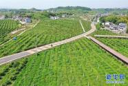 重庆忠县:田园综合体开辟乡村振兴路
