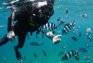 海南三亚:中国首个热带海洋牧场雏形初现
