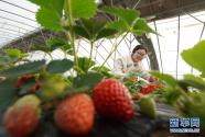 農旅融合助推鄉村振興