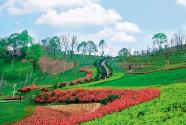 江西萍鄉安源區:一個老工礦區的鄉村振興探索