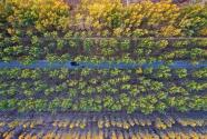 3年造林41萬畝,雄安為地球添一抹綠