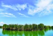 新疆烏倫古湖管護員:聽音識鳥,與鳥為鄰