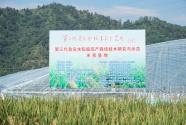 第三代雜交水稻單季畝產創新紀錄